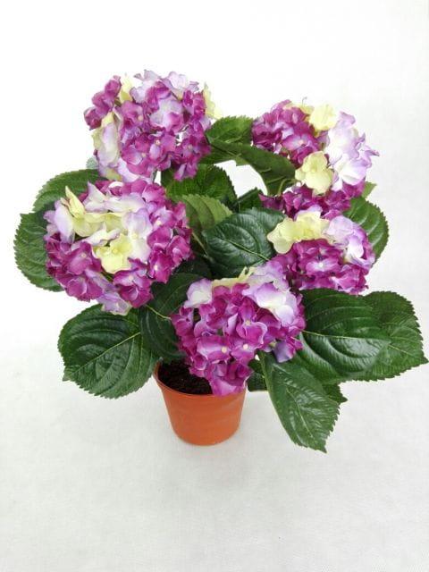 Hortensja Róż Fiolet Limonka W Doniczce 458 Sztuczna Hortensja