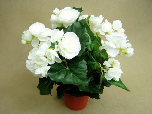 Begonia Biała W Doniczce 2349 Super Jakość Sztuczne Kwiaty Na